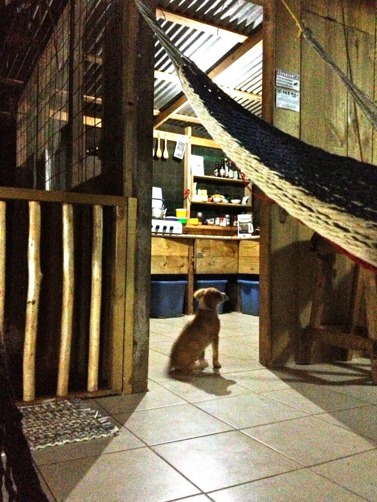 la cabina con Veinticinco, el perrito